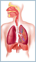 Lung Cancer and Asbestos - Diagnosis & Treatment Options